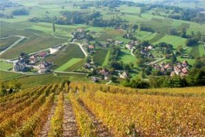 Expat Way Travel France Wine Tourism Let S Discover Wines From Savoy